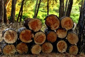 【木材直击】冲天炮陨落!木材期货今年来涨幅回归零 触及历史高点后迅速熄火 鲍威尔:物价上涨压力是过渡现象