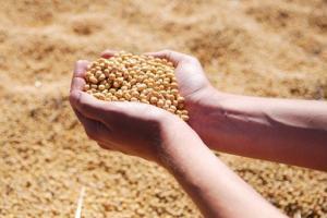 【大豆直击】标普能源:中国强劲需求提振国际大豆价格 将至少维持到2022年 巴西和美国供应紧张发挥作用